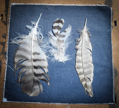 favourite feathers (1 of 1)