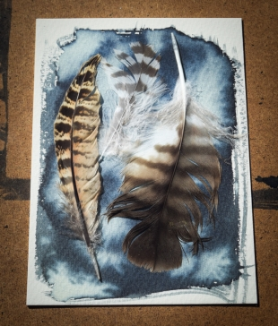 feathers before (1 of 1)