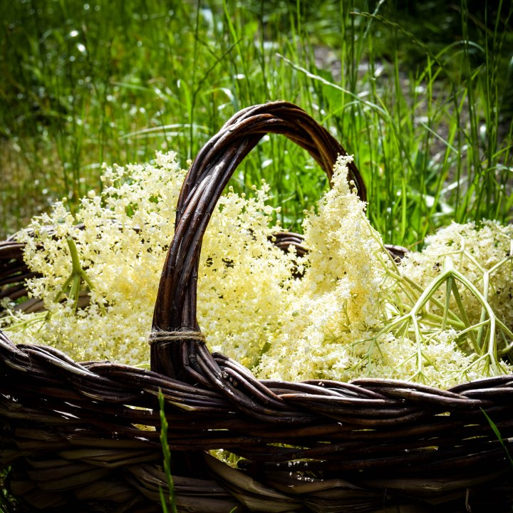 basket and flowers-0431