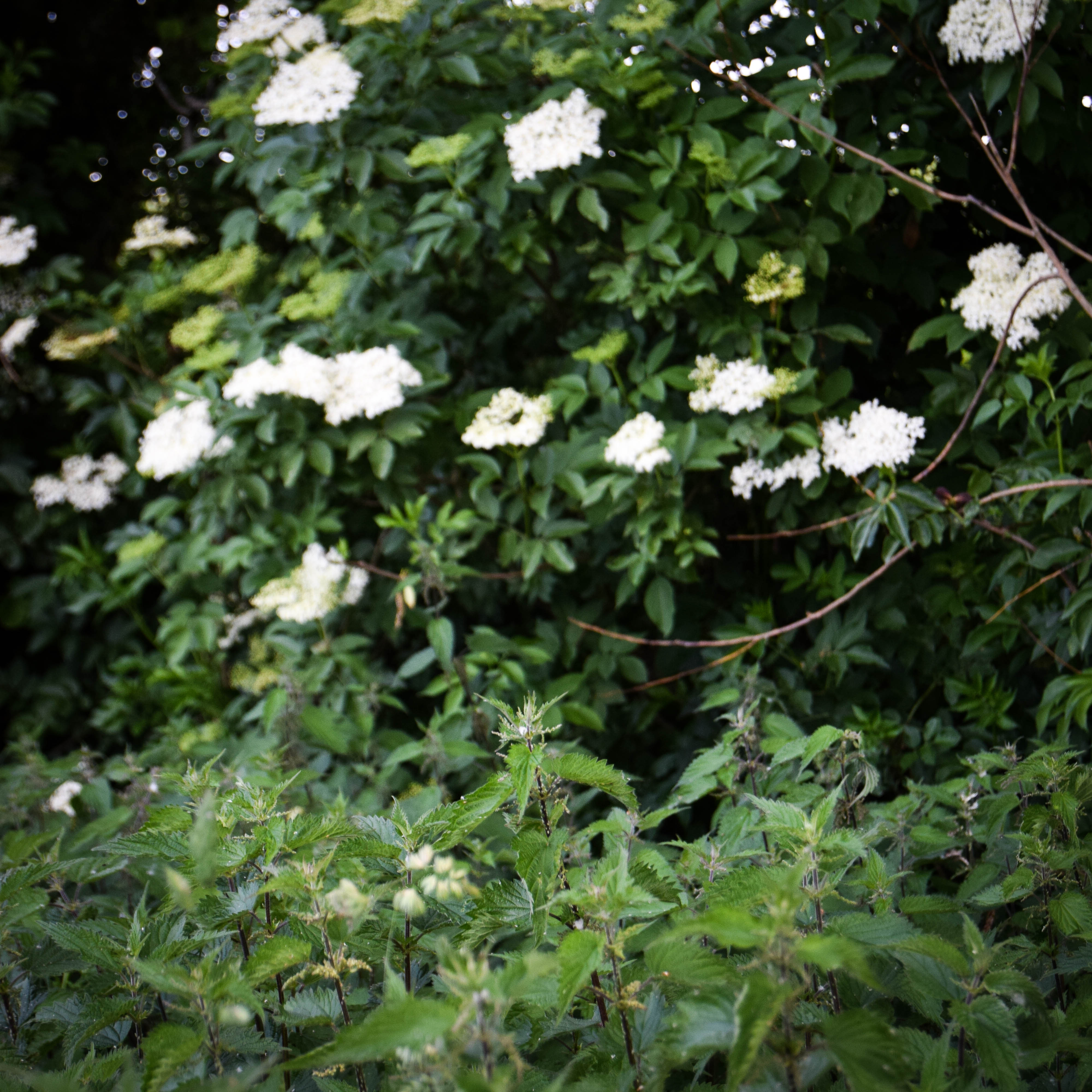 behind a sea of nettles-0425